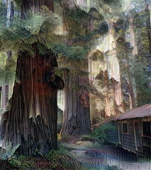 Richardson Grove (Brunsfeldo) Tags: redwoods forest