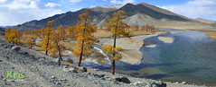 Trees turning color in autumn along the banks of the Khovd Gol (Mongolia) ( kris ) Tags: mongolia asia western altai river water banks autumn fall trees leaves orange yellow red blue mountains bayanölgii bogd nationalpark east landscape outdoor hike hiking stones pebbles island turning color along khovd gol ховдгол larch cedar forest ice snow kris