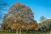 Crystal Palace Park (stephanrudolph) Tags: d750 nikon handheld london uk gb england europe europa 50mm 50mm14 50mm14d 50mmf14 50mmf14d
