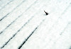 Contemplating Snow (YIP2) Tags: snow simple white winterscene lines line empty minimal minimalism blur emptiness abstract detail details repetition winter cold nature weather