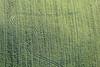 Farmers - Painting 84 (Aerial Photography) Tags: by la ndb 07122017 5sr9474 ackerbau bauernmalerei berghub feld fotoklausleidorfwwwleidorfde gründünger kurve landschaft landwirtschaft linie luftaufnahme luftbild spuren tiefenbach zweikirchen aerial agriculture curve farmerspainting field landscape line nature outdoor traces tracks tiefenbachlkrlandshut bayernbavaria deutschlandgermany deu