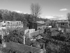 The allotment a great british pastime. (Bennydorm) Tags: buildings clouds sky inglaterra inghilterra angleterre europe uk gb britain england cumbria furness ulverston iphone5s urban outdoors plots gardenhuts pottingsheds huts cabins sheds mono horticulture gardens allotments