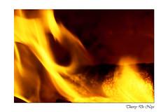 L'hiver sera chaud / Winter will be hot (Thierry De Neys - Photographies) Tags: thierrydeneys hainaut belgique belgium belgïe brainelecomte feu fire flamme flame vuur vlam jaune geel yellow bûche bois hout hood brûlé verbrand burnt or orange oranje logboek log braséro koperslager brazier brasero hiver winter chaud hot chaleur warm heat hitte