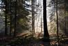 Entre ombre et lumière (Excalibur67) Tags: nikon d750 sigma globalvision 24105f4dgoshsma forest foréts landscape lumière paysage arbres trees automne autumn