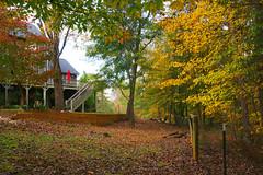 Woods Behind The House (redhorse5.0) Tags: fallcolorsinmyyard fall dawsonscountrygeorgia woodsincolor redhorse50 sonya850 nature naturesart