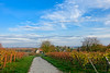 Autumn picture from my village (PauPePro) Tags: 2017 familie felix nob november
