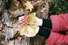 (irina birdie) Tags: filmphoto filmphotography film flora filmgrain flowers analog analoguephotography analogphotography analogue autumn portrait filmportrait 35mm 35mmfilm kodak canon canonfilm nature naturelovers natureonfilm naturephotography hands handsonfilm