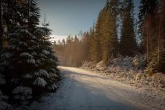 20171115003560 (koppomcolors) Tags: koppomcolors sweden sverige skog scandinavia forest winter vinter