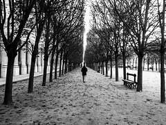 November in Paris (ingrid.cmt) Tags: bw blackwhite candid france iledefrance landscape nb noiretblanc paris paysage photoderue streetphoto streetphotography
