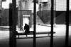 The woman of the bench (pascalcolin1) Tags: paris13 femme woman banc bench reflets reflection fenetres windows photoderue streetview urbanarte noiretblanc blackandwhite photopascalcolin 50mm canon50mm canon