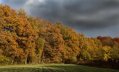 Herfst - Utrechtse heuvelrug (mariandeneijs) Tags: bos bomen boom tree trees herfst autumn herbst utrechtseheuvelrug