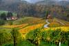 Heart of Slovenia (hapulcu) Tags: eslovenia slovenia slovenie slovenija slowenien svecina automne autumn autunno heart herbst toamna vineyard