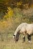 Tasting freedom (Laura Anzini) Tags: walk forest abruzzo horse nature green autumn emotions val fondillo animale cavallo mammifero foresta albero erba tree love passion