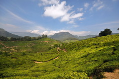 India - Kerala - Munnar - Tea Plantagen - 218 (asienman) Tags: india kerala munnar teaplantagen asienmanphotography