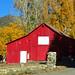 Red Barn and Gold Leaves, Oak Glen, CA 11-17