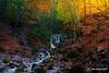 autumn colors / 011217389 (devadipmen) Tags: autumn bolu forest landscape landscapephotographer nationalpark naturepark naturephotographer orman sevenlakes sonbahar şelale türkiye waterfall yedigöller istanbul