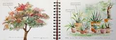 Parc de la tête d'Or Lyon 6° (geneterre69) Tags: arbre agave cactus parctêtedor lyon aquarelle nature watercolor verdure
