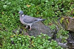 IMG_0844 (jaybluejeans94) Tags: animal animals nature chester zoo chesterzoo bird birds