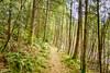 Lead the way (johnwporter) Tags: hiking scramble climbing cascades mountains stateforest issaquahalps tigermountain 徒步 爬行 攀登 喀斯喀特山脈 山 州立森林 伊薩闊阿爾卑斯 虎山