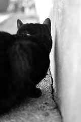 P52 Week 50 | Out of Focus (Steph*Powell) Tags: blackcat monochrome nikon d5100 35mm