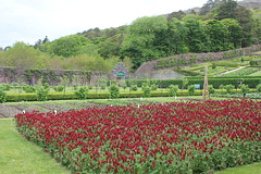 IMG_3241 (avsfan1321) Tags: kylemoreabbey ireland countygalway connemara green garden