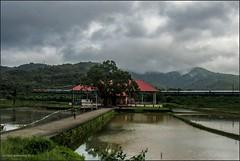 Through the serene landscape.. (Gautham Karthik) Tags: train indianrailways india kerala godsowncountry utralikkavu bhagavathy temple landscape overcast trainspotting jayantijanataexpress fields