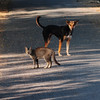 Hyderabad, India (venkatfotos) Tags: dog cat light morning mist color canoneos40d streetphotography venkat venkatphotography hyderabad india indianphotography indianstreetphotography