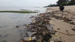 Marine litter on Changi Beach (wildsingapore) Tags: changi carpark1 threats litter trash shore singapore marine intertidal seashore marinelife nature wildlife underwater wildsingapore