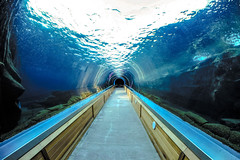 light tunnel (Paul Wrights Reserved) Tags: tunnel vanishingpoint light water glass underwater under leadinglines symmetry sky rocks framed colchester colchesterzoo