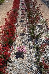 Cranbourne RBG Nov 2017 088 (Graeme Butler) Tags: water landscape history gardens australianplants architecture victoria australia
