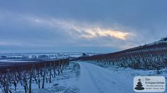 Winterzauber mit dem Wilmshof in Selzen