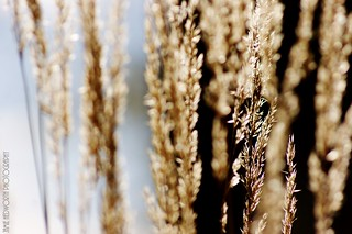 Sunlight Through Prairie Grass Landscape 1