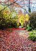 Colors of Fall (PhotoDG) Tags: colorsoffall fall color leav fallfoliage foliage season autumn