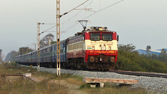 Fresh looking AJJ WAP-1 gleams under setting sun (sriguru05) Tags: railfanning raildrishti indianrailways locomotive trainspotting railroad train engine track panasonic lumix fz300 4k electric arakkonam bengaluru passenger ajj sbc wap1 sunset