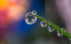 Vers la lumière - 4078 (YᗩSᗰIᘉᗴ HᗴᘉS +12 000 000 thx❀) Tags: light lumière drop droplet pearl goutte color nature macro supermacro colour 7dwf perle hensyasmine yasminehens