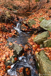 Stream in the middle of dead leaves