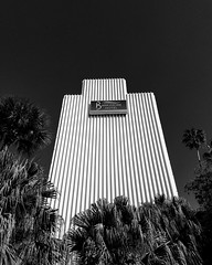 Day 17 🌴🏢 __________________________________  #bwphotography #blackandwhite #florida #FROtography #photographer #challenge #30daychallenge #barrymorehotel #hotel #palmtrees #trees #clearsky #thebarrymore #building #tampa #downtown #sky #p (am13er) Tags: thebarrymore blackandwhite hotel pureflorida 30daychallenge barrymorehotel igersofflorida sky florida trees clearsky igersoftampa downtown bwphotochallenge art photographer palmtrees building bwphotography bwphoto day17 blackandwhitephotochallenge challenge tampa frotography
