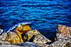 """Decollo (wallace39 """" mud and glory """") Tags: gabbiano seagull mare sea scogli rocks"""