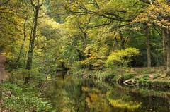 The Teign Valley, Dartmoor (Baz Richardson (trying to catch up - again!)) Tags: devon dartmoor dartmoornationalpark riverteign teignvalley trees autumnscenes