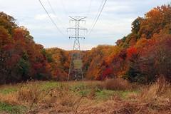 IMG_4618_1.psd (crashnburn763) Tags: nature fall fallcolors forest tree grass