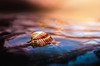 Sea (Pásztor András) Tags: shell sea ocean water reflection sky sun light moddy colorful colors blue orange nature dslr nikon 50mm 18g d5100 hungary andras pasztor photography 2017
