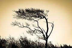 Baum im Wind (maik_sen) Tags: