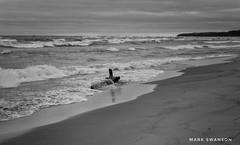 Washed Up (mswan777) Tags: ansel white black monochrome 1855mm nikkor d5100 nikon bridgman lakemichigan autumn wind sky cloud horizon scenic driftwood seascape nature outdoor wave water sand shore beach