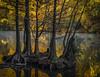 Black Friday (keith_shuley) Tags: dawn fall fallcolors redbudisle lake river stream backwater cypressgrove austin texas texashillcountry