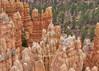 Bryce Canyon (sbuckinghamnj) Tags: hoodoos brycecanyon brycecanyonnationalpark utah landscape