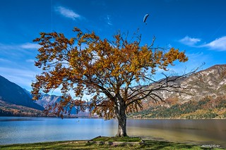 Lake Bohinj in Autumn