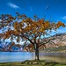 Lake Bohinj in Autumn