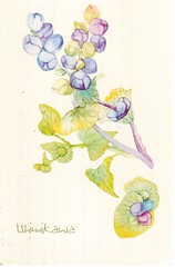 Postcrossing TW-2398794 (booboo_babies) Tags: flower plant drawing art taiwan postcrossing