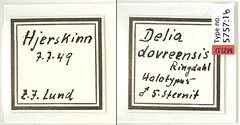 Delia dovreensis Ringdahl, 1953 (Biological Museum, Lund University: Entomology) Tags: diptera anthomyiidae delia dovreensis mzlutype05757
