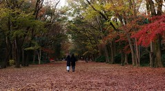 Early Winter /  Kyoto  Tadasu-no-mori Forest (maco-nonch★R) Tags: shimogamoshrine handheld winter people colour color trees maple 糺の森 下鴨神社 earlywinter 初冬 冬 京都 世界文化遺産 unescoworldheritagesites canon eosm5 efm18150mmf3563isstm lateautumn autumn fall